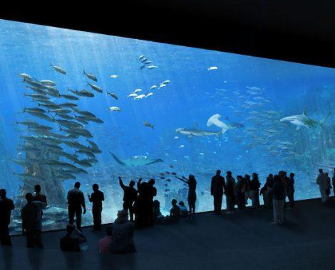 pers-14b-spectacle-de-l-ocean-recadr-e.1520986.w740